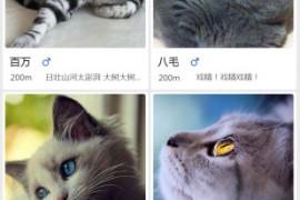 有猫以后 全新社交互动平台软件app下载