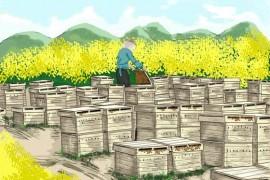 蜂蜜微商怎么做微商营销?微商怎么在朋友圈卖蜂蜜?