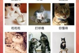 猫语翻译器 一款能够听懂猫星人说话的app软件下载