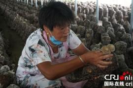 """安徽砀山""""播种""""互联网经济 让农产品红起来"""